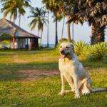 愛犬と一緒に夏休みを満喫!バカンスが楽しめる「休暇村」ってどんなところ?