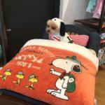 ペットファッションのセレクトショップ! ハーネスドッグの人気ファッションアイテム&愛犬グッズ特集