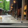 我が家のオススメ!愛犬と遊ぶちょっと「通」な軽井沢特集