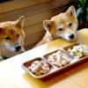 夏は涼しい店内で食事を♪愛犬と一緒に入店OKなカフェ&レストラン5選<神奈川県央~湘南エリア>