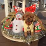 愛犬とお台場で遊ぼう!お台場海浜公園~DOGDEPTお台場東京ビーチ店~ヴィーナスフォートへ♪