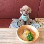 愛犬とお台場デートを楽しもう!店内で食事が楽しめるおすすめレストラン&カフェ5選