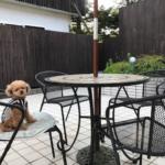 愛犬と一緒に会員制リゾート「サンダンス・リゾート軽井沢」に宿泊体験レポ!<長野県北佐久郡>