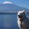 実は避暑地!富士山を臨む山中湖で愛犬と一緒に楽しめる人気スポット特集