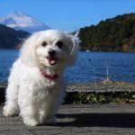 ワンコ用温泉つき!愛犬と一緒に泊まれる箱根のリゾート宿泊施設4選&周辺のおすすめ観光スポット
