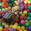 2018年4月ニューオープン!わんちゃん専用会員制リゾート「わん's LAND三浦海岸」に愛犬と宿泊体験