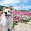 犬連れに優しい愛知県蒲郡市で海鮮丼ランチとパワースポット巡りで開運アップ!