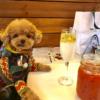 愛犬と浅草ぶらり旅♪ワンちゃんと一緒に食事ができる浅草のレストラン&カフェ&居酒屋特集