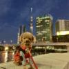 秋の行楽シーズンにおすすめ!愛犬と一緒に水上散歩&人力車&浅草下町グルメ食べ歩きツアー