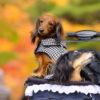 秋におすすめ!愛犬と楽しむ9月・10月が見頃の紅葉スポット<関東編>