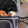 愛犬と一緒に食事もショッピングも散策もできちゃう!人気の複合商業施設4選<関東近郊>