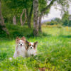 【撮影TIPS付】愛犬とSNS映え抜群の清里・八ヶ岳で撮影しよう!おすすめスポット5選!<山梨県>