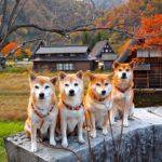 【10月が見頃】愛犬と行く東海地方のおすすめ紅葉スポット<愛知・岐阜・三重・静岡>