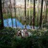犬連れ観光OK!SNSで今話題の北海道日高町にある「黒い池」は新名所になるか?!