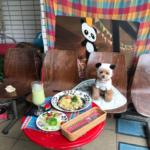 東京スカイツリーを眺めながら愛犬と周辺散策♪ ワンちゃんと一緒にショッピングやグルメを楽しめるお店特集