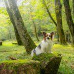 まるでジブリの世界!愛犬と一緒に楽しめる岐阜県「せせらぎ街道」の散策&撮影スポット特集