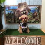 愛犬と一緒に本格イタリアン・フレンチを♪室内ドッグラン付きドックカフェ「はるの ガーデンカフェ 」<千葉県四街道市>