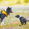 <IKEAや100円ショップ>愛犬用マナーパックを買うならどこ?おすすめ5社を徹底比較!
