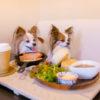 【浜松SA・IC】新東名高速道路途中下車の旅!愛犬と一緒に馬がいるドッグカフェ&仙厳の滝&空中散歩巡り!<静岡県>