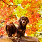 愛犬と一緒に秋の養老渓谷もみじ祭り&グランピングを楽しもう!<千葉県>