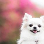 愛犬と行く秋の修善寺旅行♪ワンちゃんと一緒に紅葉を楽しめる観光スポット&おすすめ宿特集<静岡県伊豆市>