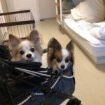 シルバーフェリー(八戸~苫小牧)で犬連れ北海道の旅!乗船方法・注意点を徹底解説!