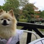 またまた行っちゃいました!2018年秋、愛犬と平成最後の軽井沢ドライブ旅行<長野県>