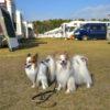 犬連れ車旅の変化を探る!キャンピングカー最大級オフ会「ナッツRV感謝祭」潜入レポート!