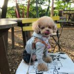 【千葉市】愛犬連れにも人気!ツリーハウスのある森カフェ&コミュニティシェアスペース「椿森コムナ」