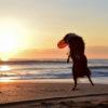 愛犬と一緒に初日の出!ペットと車中泊も可能!関東周辺の初日の出スポット6選