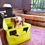 犬連れで秋冬キャンプへ!施設内温泉付きのおすすめキャンプ場8選<関東周辺>
