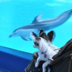 愛犬も一緒に家族旅行!静岡県にあるペット可のファミリー向けレジャースポット12選!