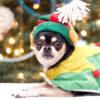 小型犬~大型犬までゆったり歩けるロマンチックなクリスマスタウン & イルミネーションスポット