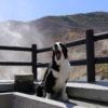 人気の定番観光地!愛犬と一緒に紅葉&温泉が楽しめる秋の箱根旅行プラン<神奈川県>