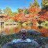【成田駅】愛犬とお散歩デート♪成田山公園紅葉まつりと老舗店が連なる表参道食べ歩き