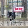 【山梨県版】愛犬も一緒♡ペット可のファミリー向けおすすめレジャースポット5選!