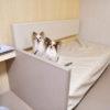 本州と北海道を最短ルートで結ぶ津軽海峡フェリー(青森~函館)が新しくなって犬連れでも快適に!?