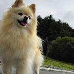 いま、犬山城が熱い!ブームに便乗して愛犬と城下町散策♪<愛知県 犬山市>