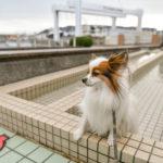 【伊東・伊豆高原周辺】犬連れ大歓迎!無料のおすすめドッグラン&観光施設5選!