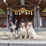初詣も愛犬と一緒♡東海地方にある人気の犬連れ初詣先の特集!<小型犬~大型犬対応>