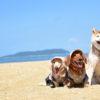 年末年始は暖かい静岡県沿岸で!愛犬と一緒に楽しめるイベント&観光スポット特集<熱海、伊豆高原、日本平>