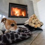 2018年オープンのペット宿特集!愛犬と泊まれる宿のおすすめポイント