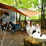 ペットに最適なキャンピングカーとは?我が家の犬連れ仕様にしたキャンピングカーを大公開!