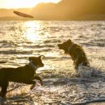 <三重県>愛犬と一緒にフォトジェニックな「伊勢志摩」旅行!おすすめの絶景スポット特集!
