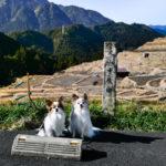 気分は異国の地?愛犬と一緒に冬の「丸山千枚田」がフォトジェニックだった!<三重県>