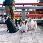 愛犬と伊豆高原で初詣するなら「神祇大社」!ワンちゃん連れにおすすめの理由とは?
