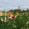 年明けは長崎が熱い!愛犬と一緒に約1,000万本の水仙が咲く「のもざき水仙まつり」&約30万球のイルミネーション「光の庭園」