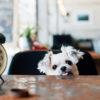 店内ワンちゃんOK!インスタ映え間違いなしの都内のお洒落なレストラン&カフェ特集