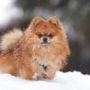 ワンコも大好き雪あそび♪愛犬と一緒に楽しめるスノーシュー&スノードッグラン&スキー場特集