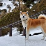 愛犬と冬の秋田へ!たくさんのワンちゃんで盛り上がる「犬っこまつり2019」&田沢湖や角館の散策&「横手の雪まつり2019 」